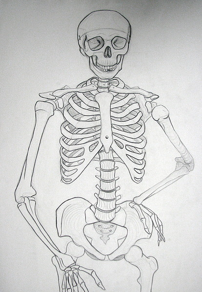 Vinovas Skeleton Drawing For Life Drawing Class By Tiffanyelaine